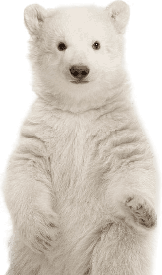 polar bear standing over the sidebar